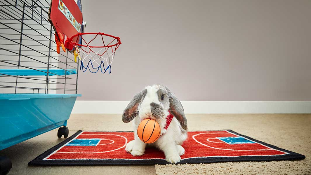 Bini the basketball-playing bunny hops into the record books