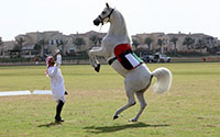 Fastest 10 m on hind legs by a horse