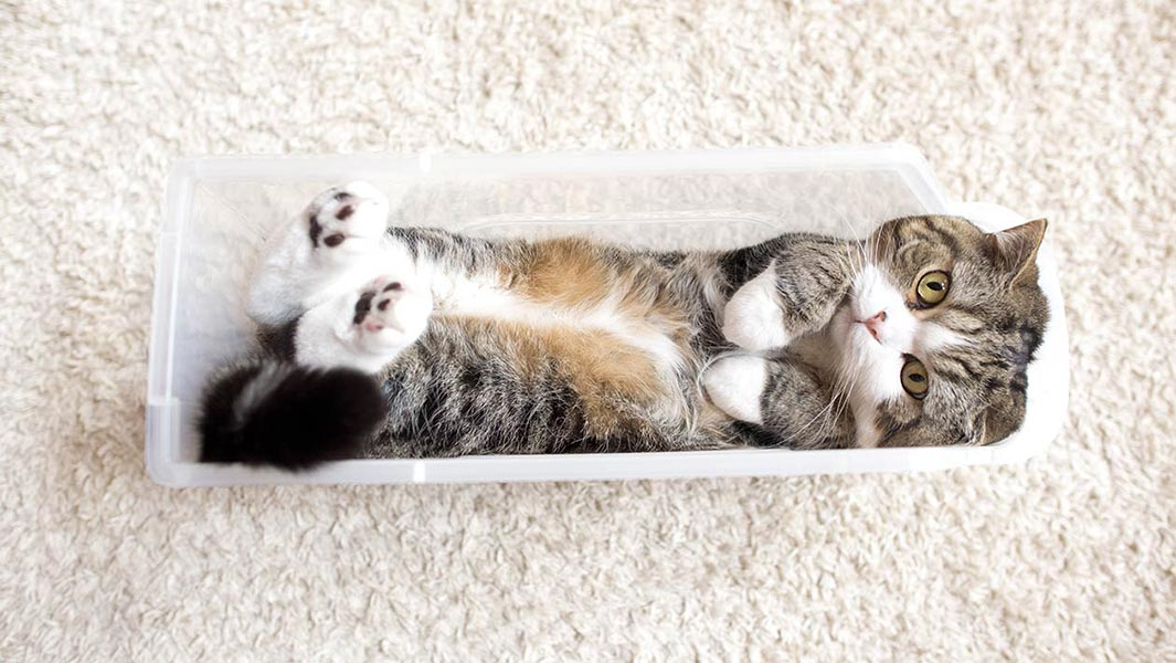 Meet YouTube's most watched animal - Maru the cat