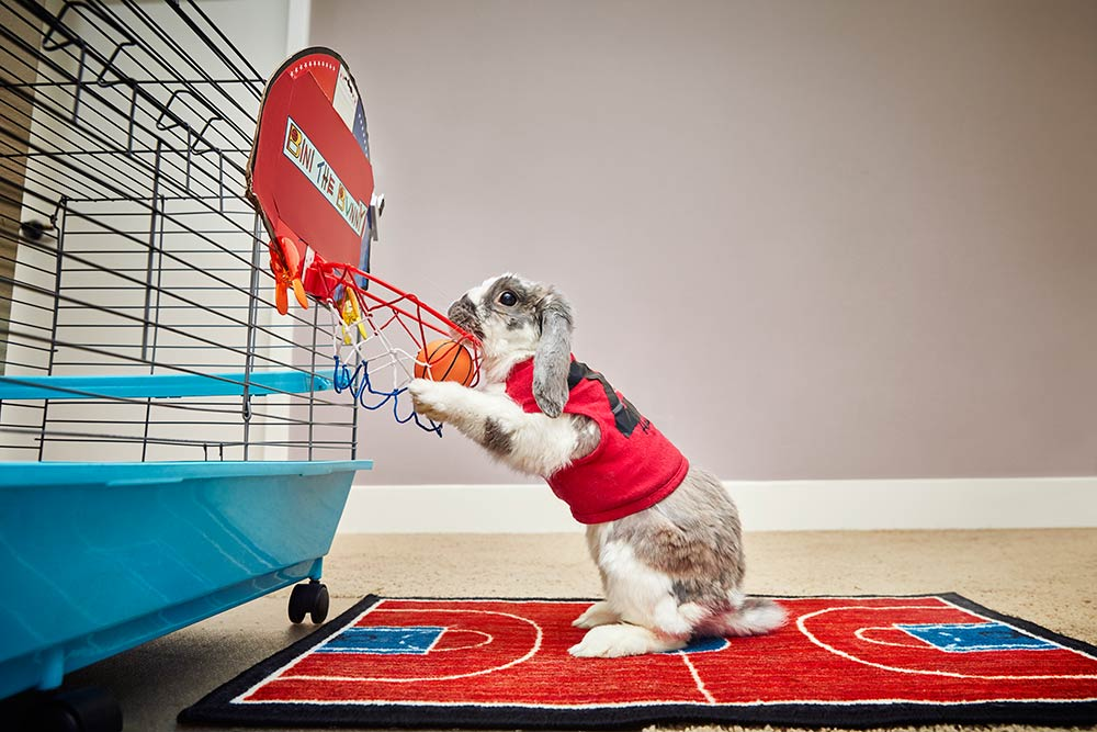 Most basketball slam dunks by a rabbit Bini