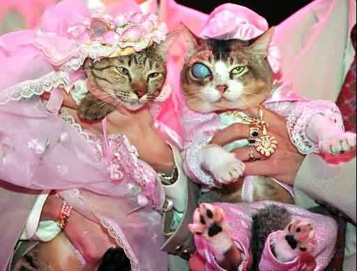 Most expensive wedding for pets