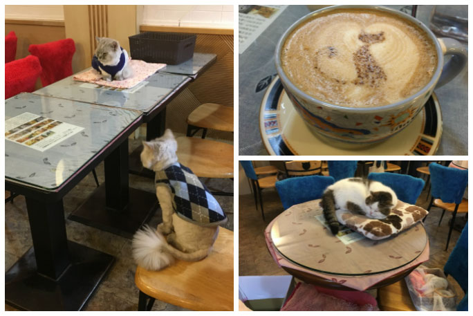 Oldest cat cafe still in existence