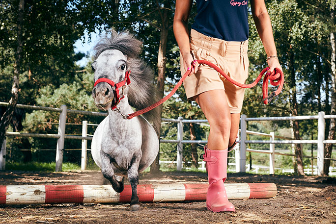 Bombel the Miniature Horse