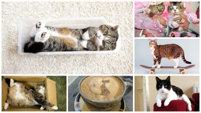 World Cat Day: A timeline of fascinating feline record breakers