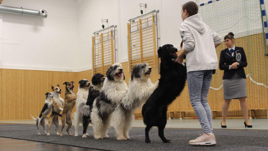 Meet the 12-year-old girl who's taught dogs how to conga and more!