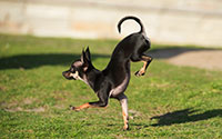 fastest-5-m-on-front-paws-by-a-dog-c