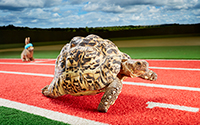 fastest-tortoise-watch-carousel