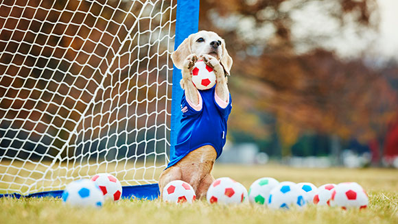 most-balls-caught-by-a-dog-with-the-paws-in-one-minute-header