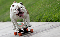 otto-the-skateboarding-bulldog-watch