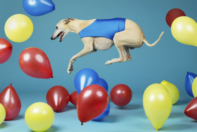 Fastest time to pop 100 balloons by a dog 13