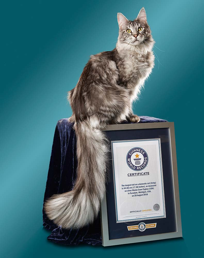 Longest tail on a cat certificate