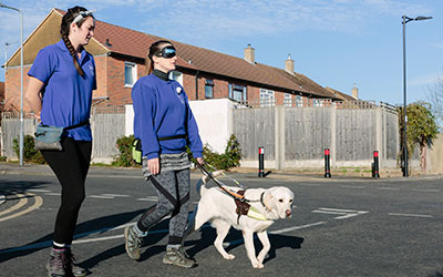 Most guide dogs trained by an organisation