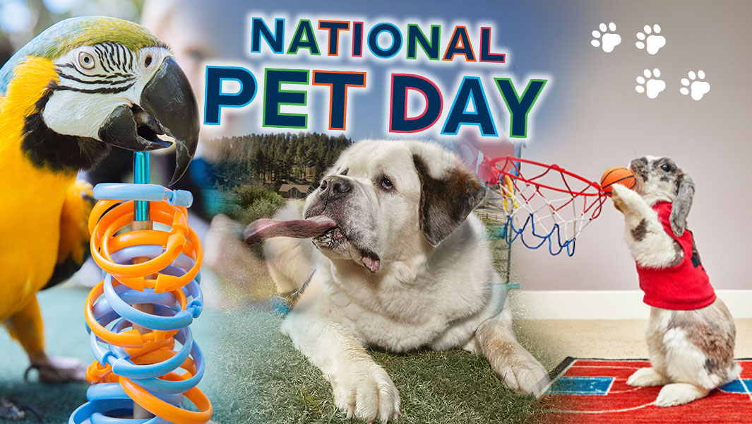 National Pet Day Main