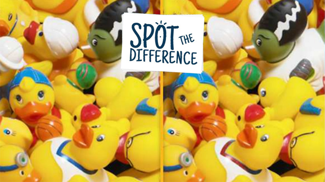 lots of ducks with small spot the difference sticker