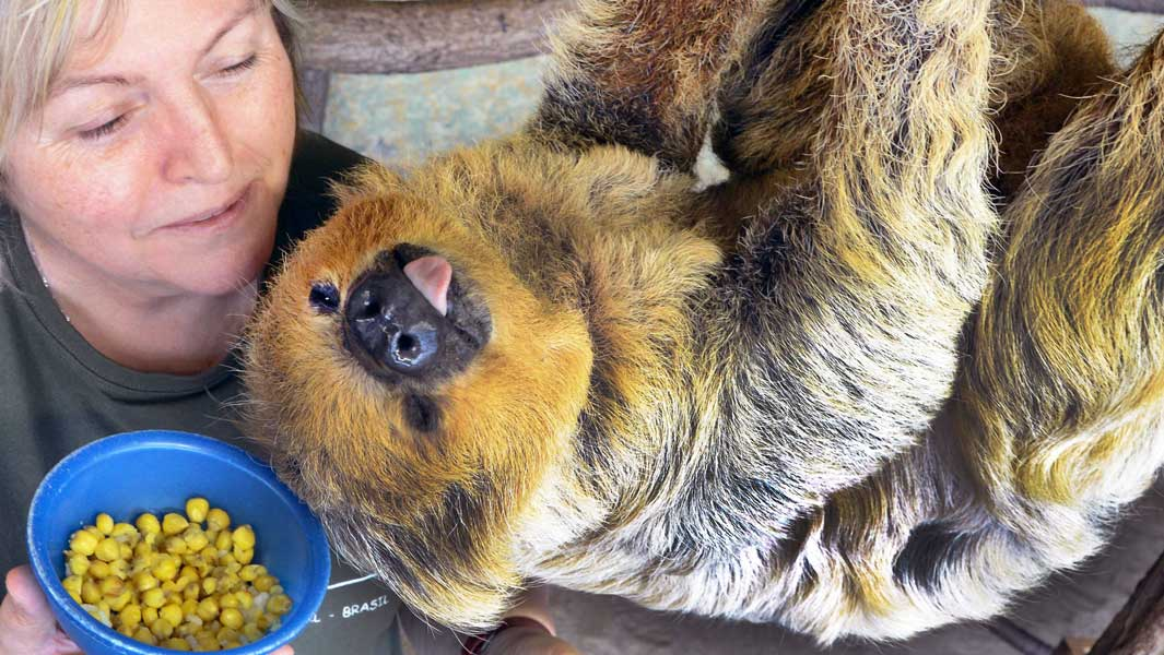 The world's oldest sloth!
